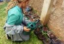 Plantio de culturas