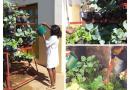 Professores cuidam da horta dos alunos